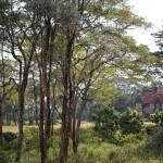 Giraffe Manor mit Gelände