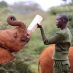Elefanten Waisenhaus / Fütterung