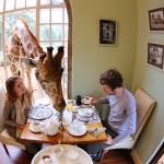 Giraffe Manor / Frühstückstisch