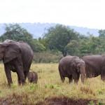 Elefantenmutter mit drei Jungtieren