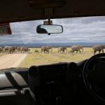 Elefantenherde vor dem Jeep