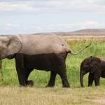 Elefanten im Sumpfgebiet